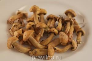 грибы козлята с маринованным луком
